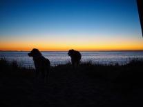 Aussie silhouettes